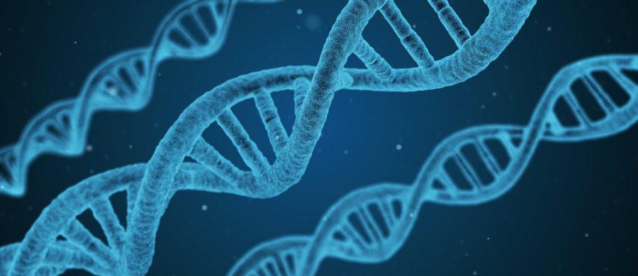 ТЕСТЪТ ЗА ДНК ФРАГМЕНТАЦИЯ